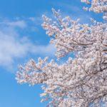 春の愛知旅行は、日間賀島と国宝犬山城がおすすめ!!名古屋市在住の私が紹介します!